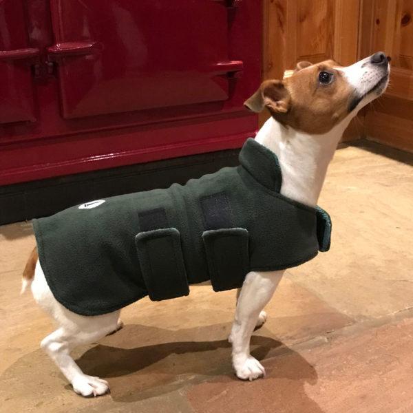 Dog-&-Field-Terrier-Coat