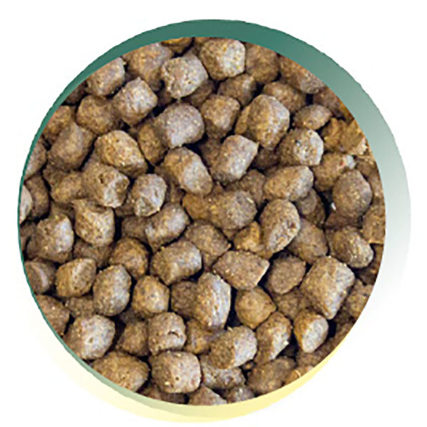 Dog and Field Grain Free Puppy Kibble - Close Up