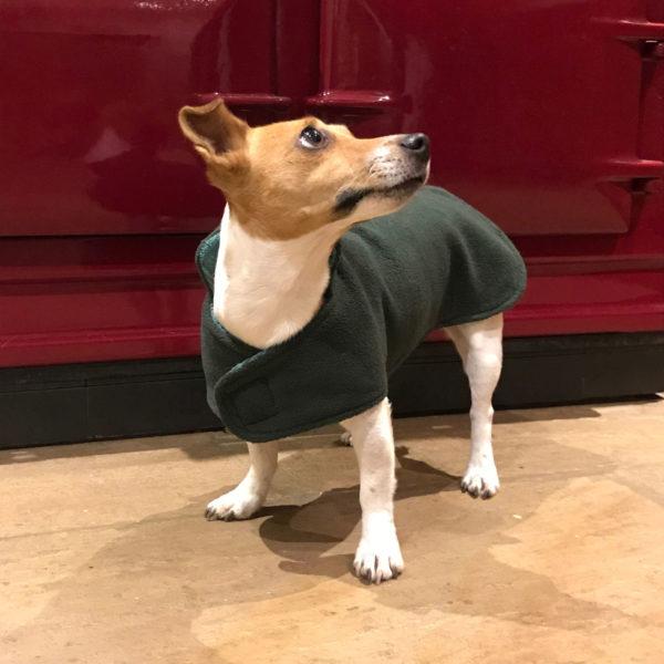 Terrier-Coat
