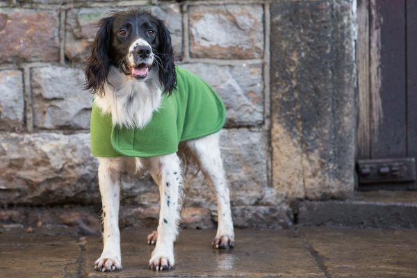 Dog & Field™ Duel Layer Light Green Toweling Coat - Sizes XS - XXL-645