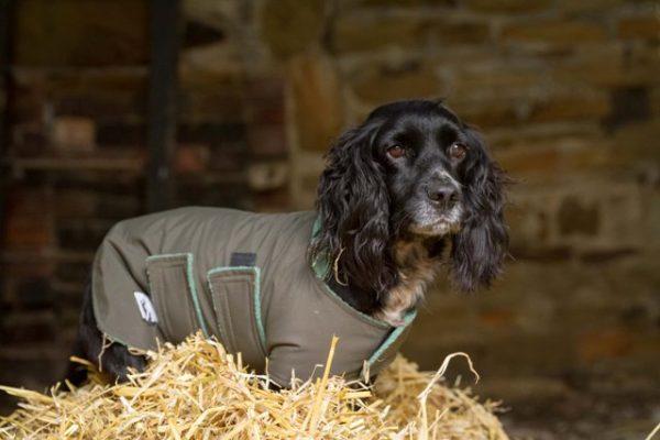 Medium Small Waterproof Dog Coat