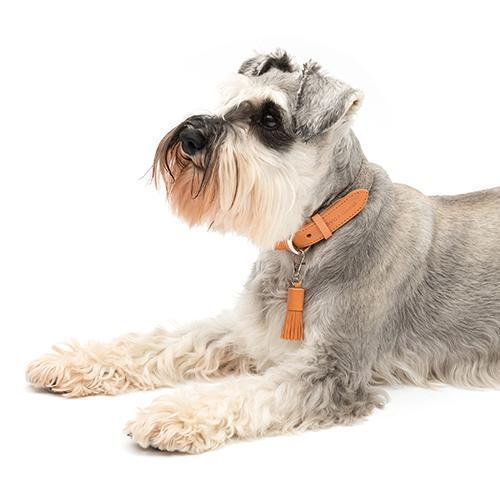 Camello Leather & Grey Tweed Dog Collar