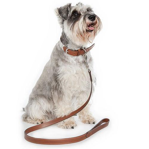 Tan Leather Dog Leads
