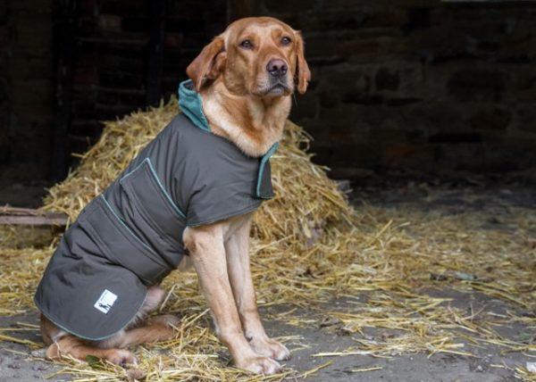Extra Large Waterproof Dog Coat
